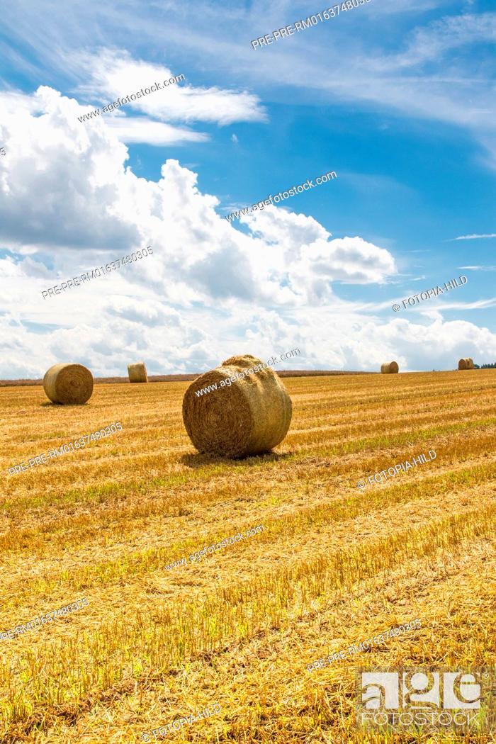 Imagen: Round straw bales on a stubble field between Dankelshausen and Bühren, Samtgemeinde Dransfeld, Göttingen District, Lower Saxony, Germany.
