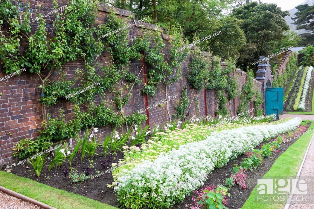 plantes dans le jardin potager et arbres frutiers en espalier le long du mur en brique. Black Bedroom Furniture Sets. Home Design Ideas