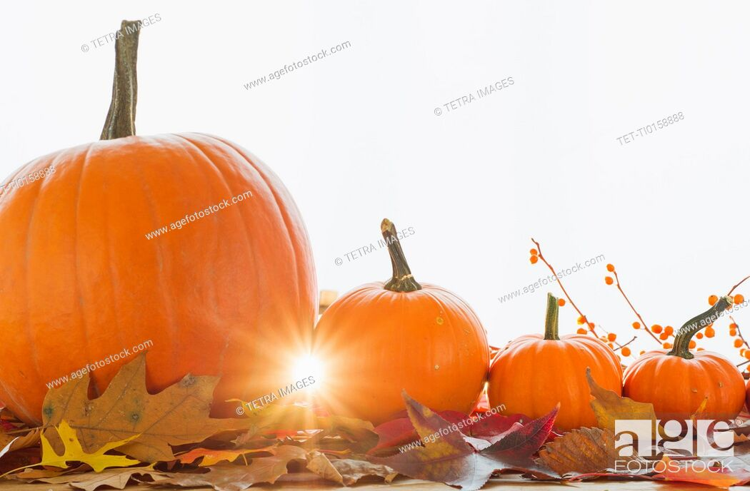 Stock Photo: Studio shot of pumpkins and leaves.