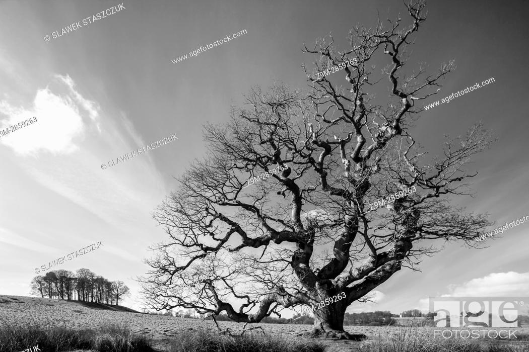 Stock Photo: Early spring in Petworth Park, West Sussex, England.