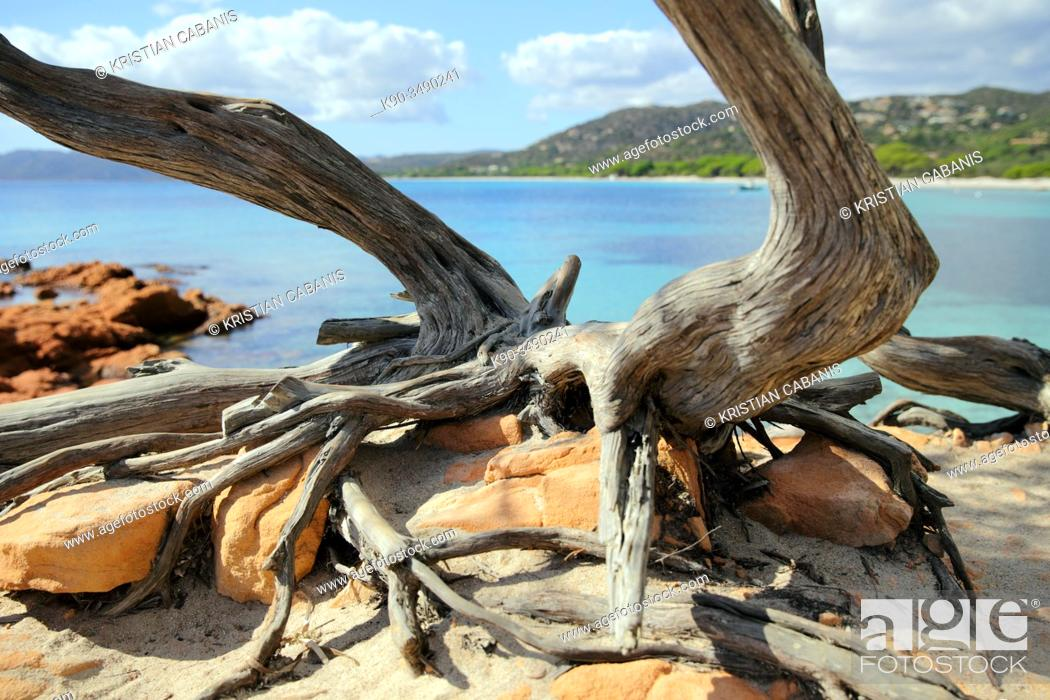 Stock Photo: Dried tree trunk in the foreground with the bay of Palombaggia, Corsica, France, Europe.