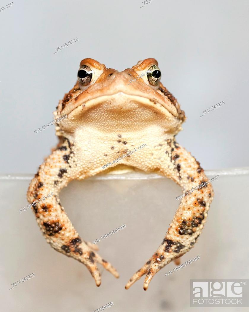 Stock Photo: A grumpy toad.