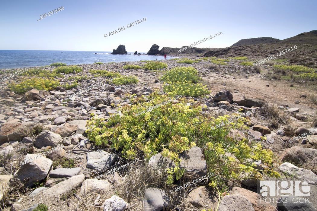Photo de stock: Volcanic landscape coast in Cabo de Gata natural park, Almeria, Andalusia, Spain.