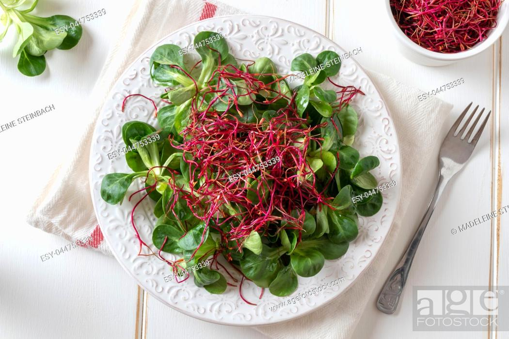 Stock Photo: Salad with lamb's lettuce and fresh red beet sprouts, top view.
