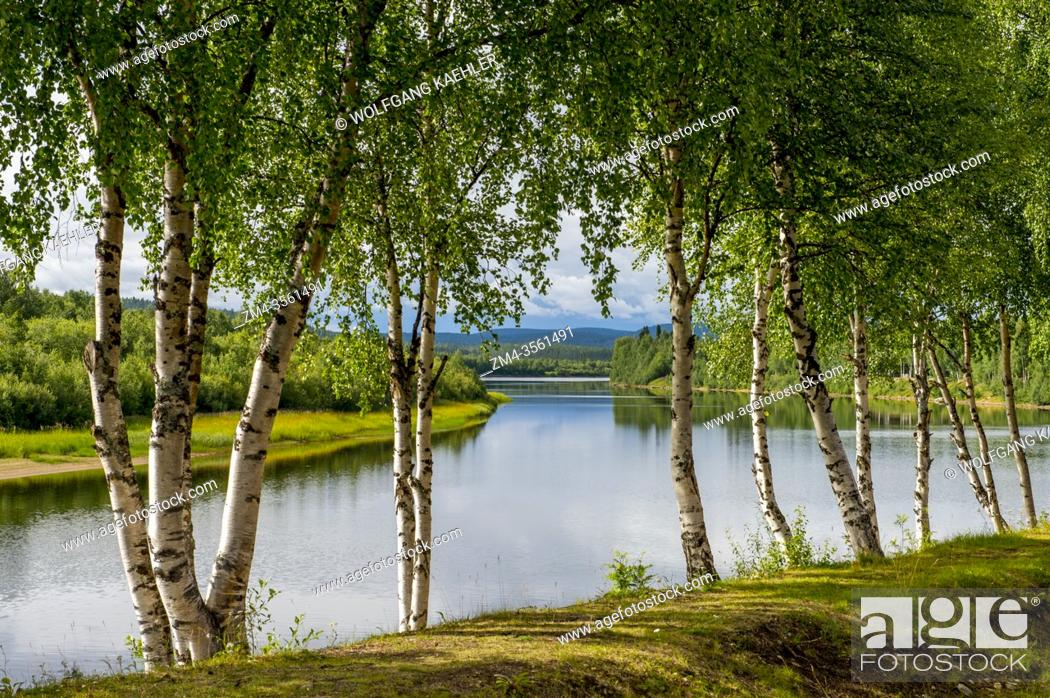 Imagen: View of Ivalo River in Ivalo, a village in Inari, Lapland, in northern Finland with Birch trees in foreground.