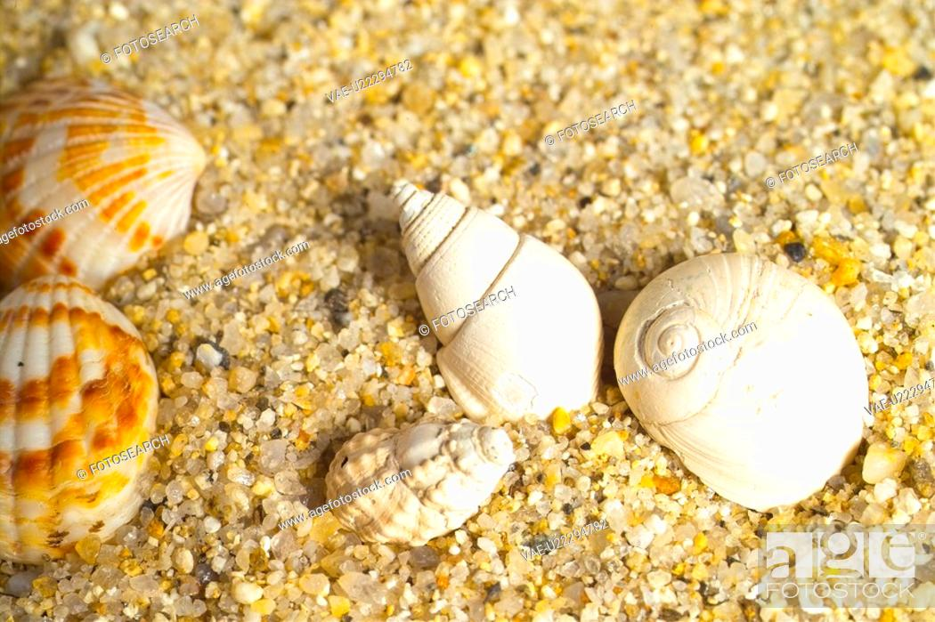 Stock Photo: mollucca, animal, mollusc, mollusks, mollusk, shell, conch.