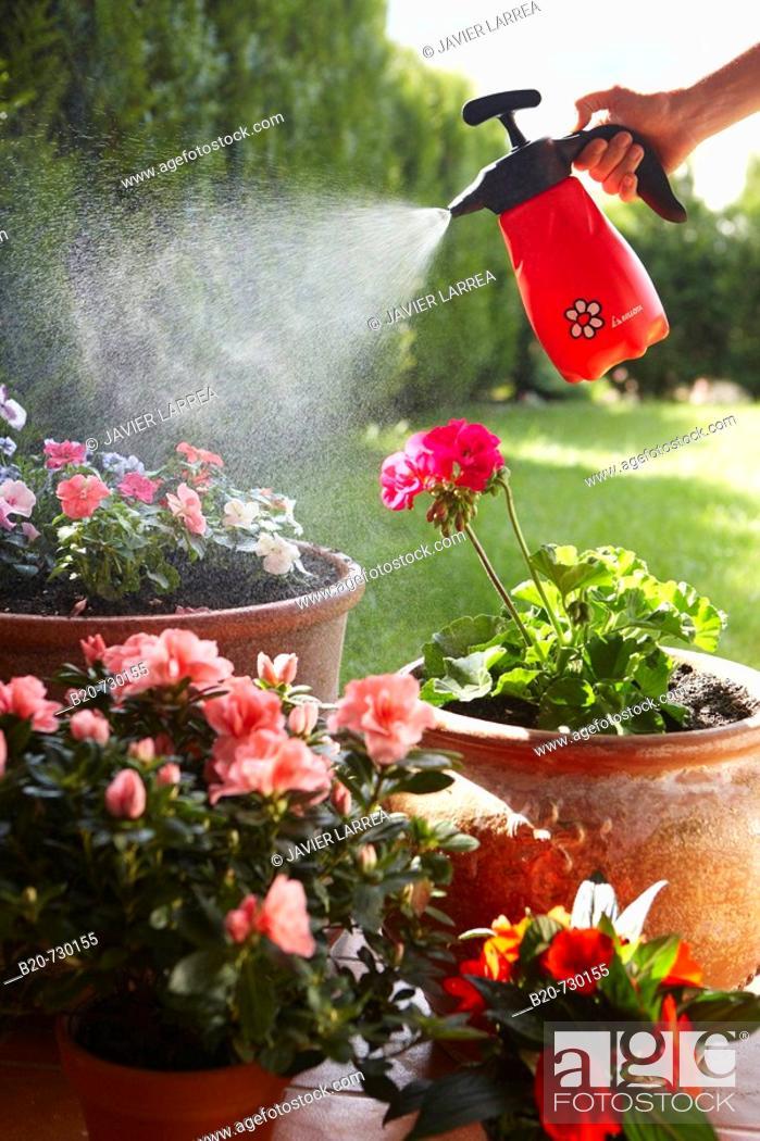 Stock Photo: Irrigation with sprayer, garden.
