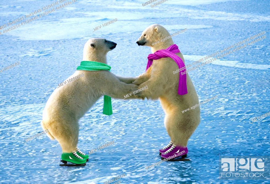 Stock Photo: Polar Bear - ice skating (Ursus maritimus). Digitally manipulated image.