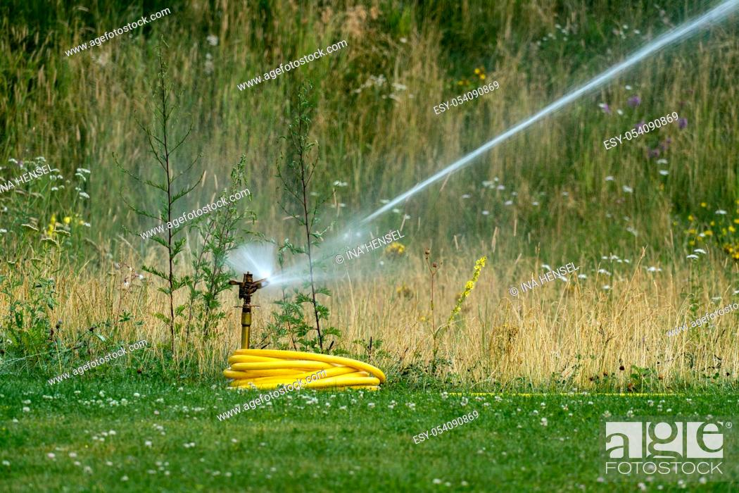 Stock Photo: Watering the lawn in summer with a lawn sprinkler.
