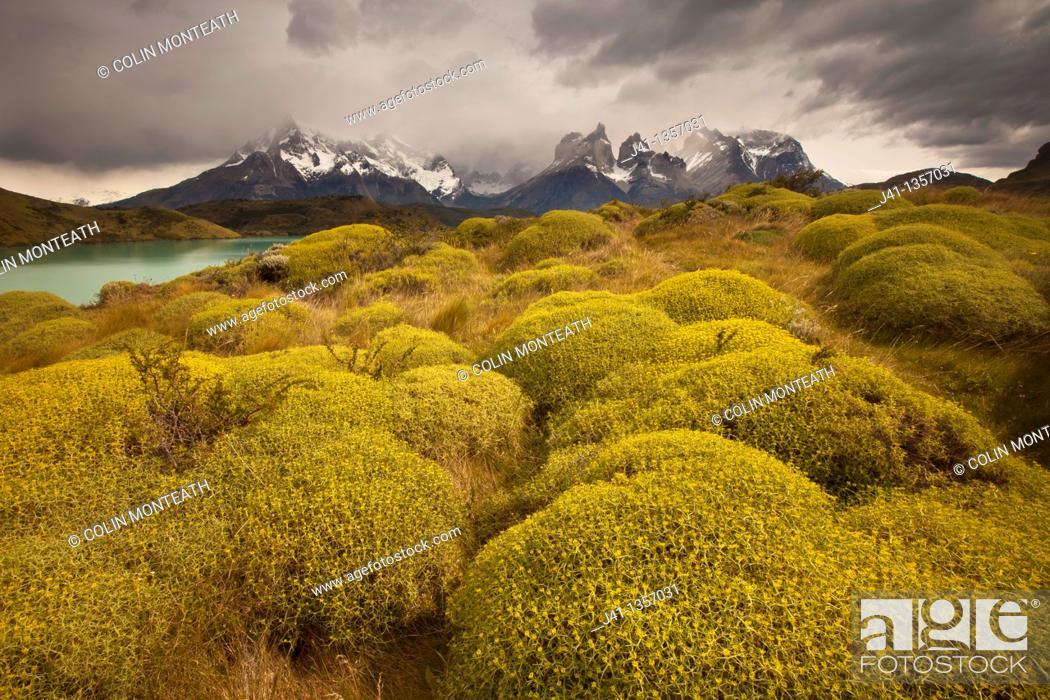 Stock Photo: Rainstorm engulfs Cuernos del Paine peaks, thorny 'matabarrosa'  Mulinum spinosum in flower, Parque Nacional Torres del Paine, Patagonia, Chile.