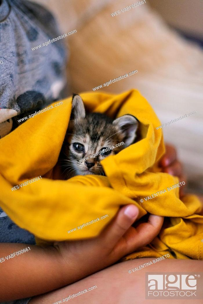 Stock Photo: Hands of little boy holding tabby kitten covered with yellow blanket.