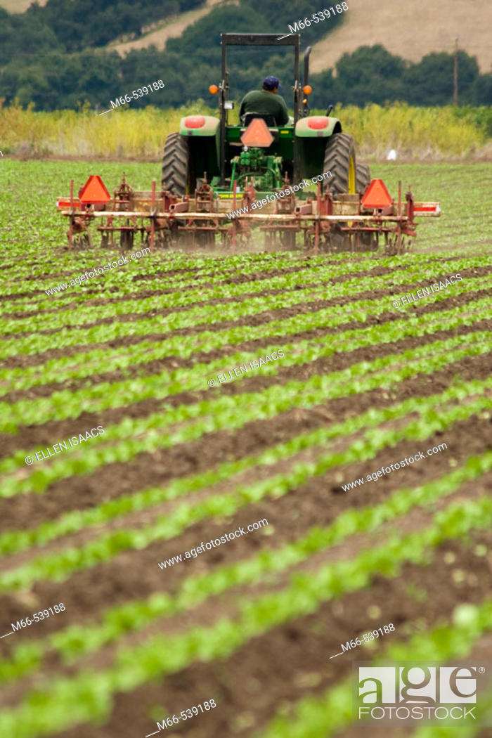 Stock Photo: Man driving John Dere tractor through rows of crops in Watsonville, California field.