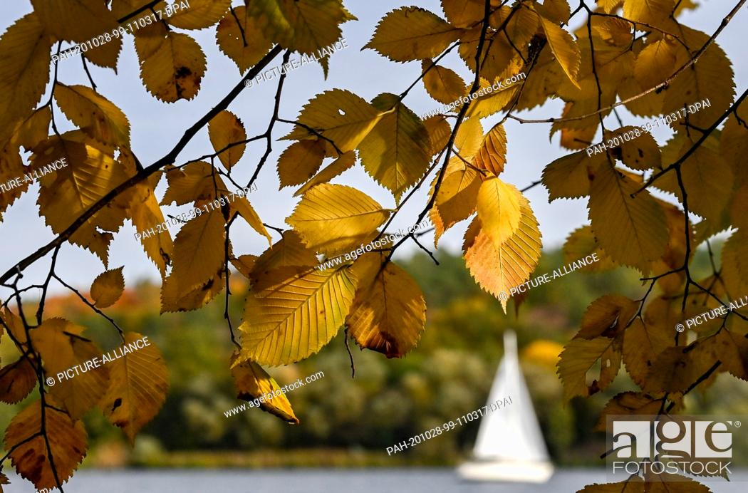 Stock Photo: 27 October 2020, Berlin: A sailing boat passes by Gatow on the Havel river behind brightly coloured leaves in sunny autumn weather.
