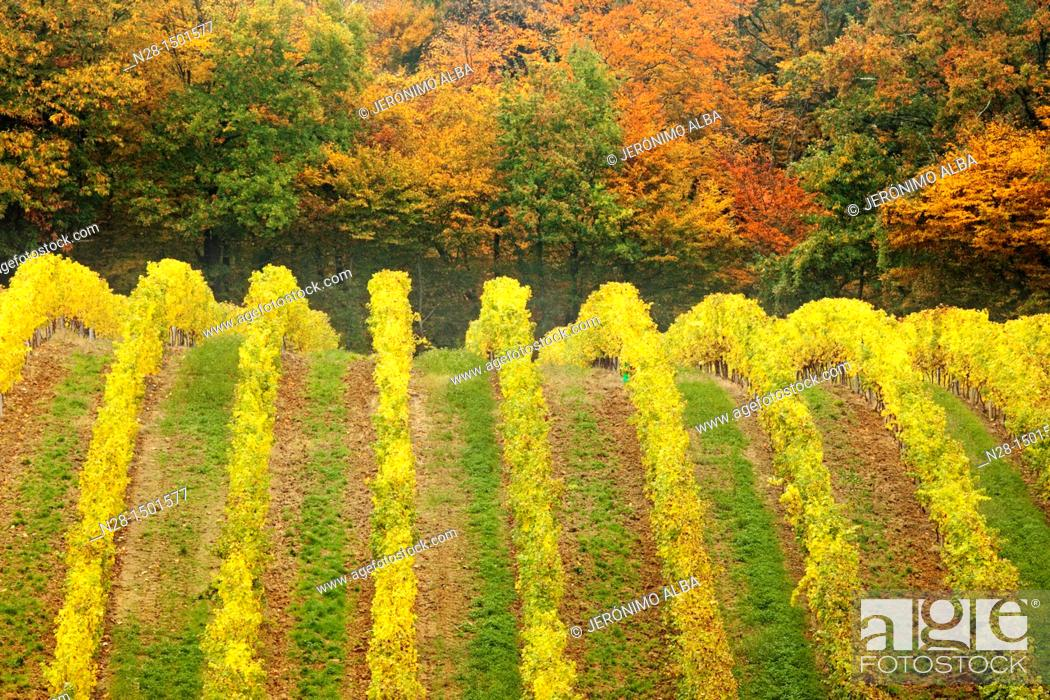 Stock Photo: Domaine de Joy vineyards, Armagnac, Panjas, Midi-Pyrenees, France.