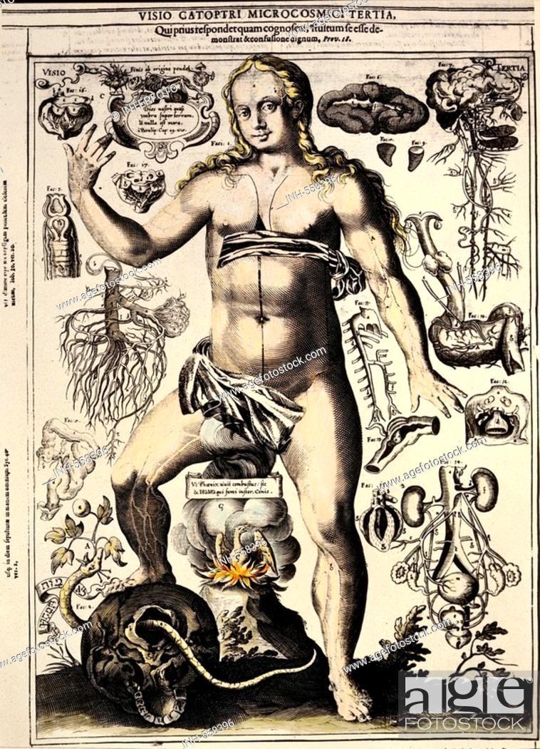 Medicine Anatomy Female Body Copper Engraving By J Remmelin
