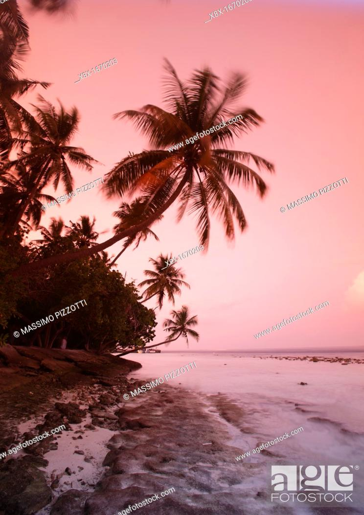 Stock Photo: Palm trees at sunset, Biyadhoo island, Maldives.