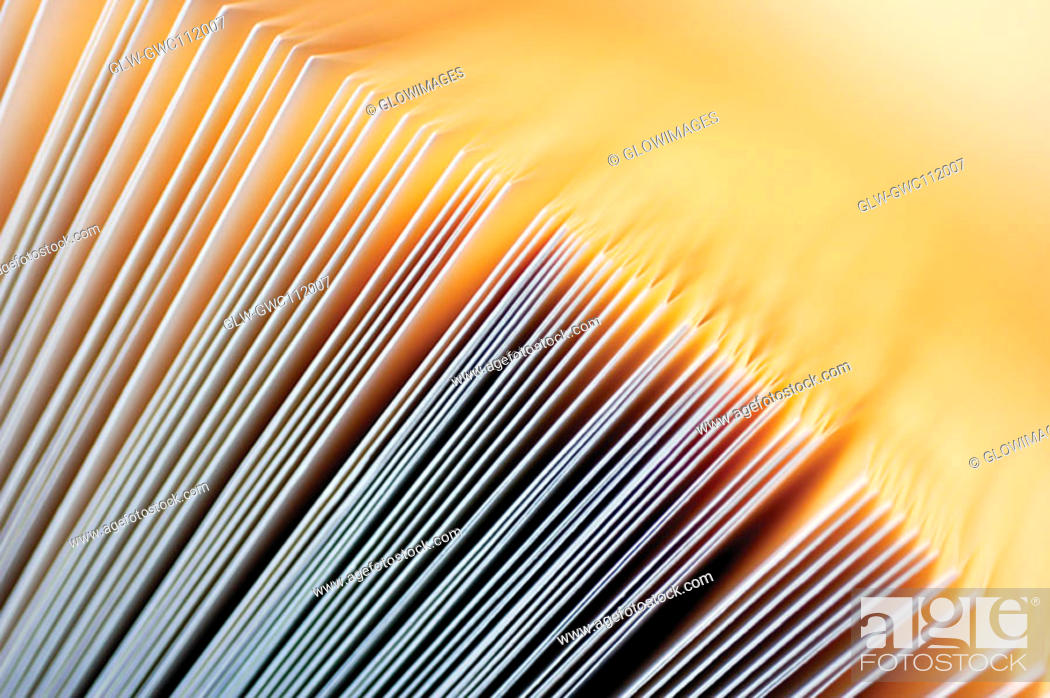 Stock Photo: Close-up of documents in a row.