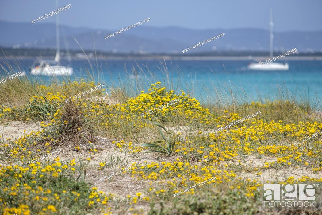 Stock Photo: kitesurfing on Illete beachFormentera, Pitiusas Islands, Balearic Community, Spain.