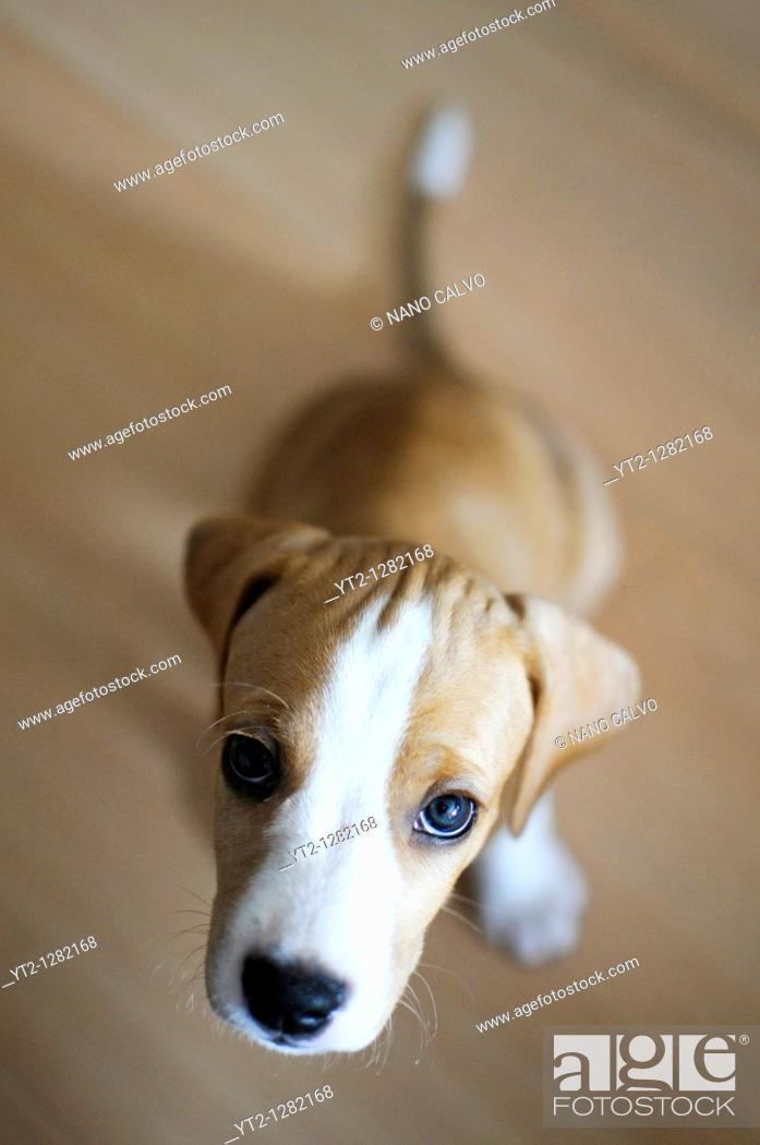 Stock Photo: Portrait of Ronnie, a 1/2 months old puppy.