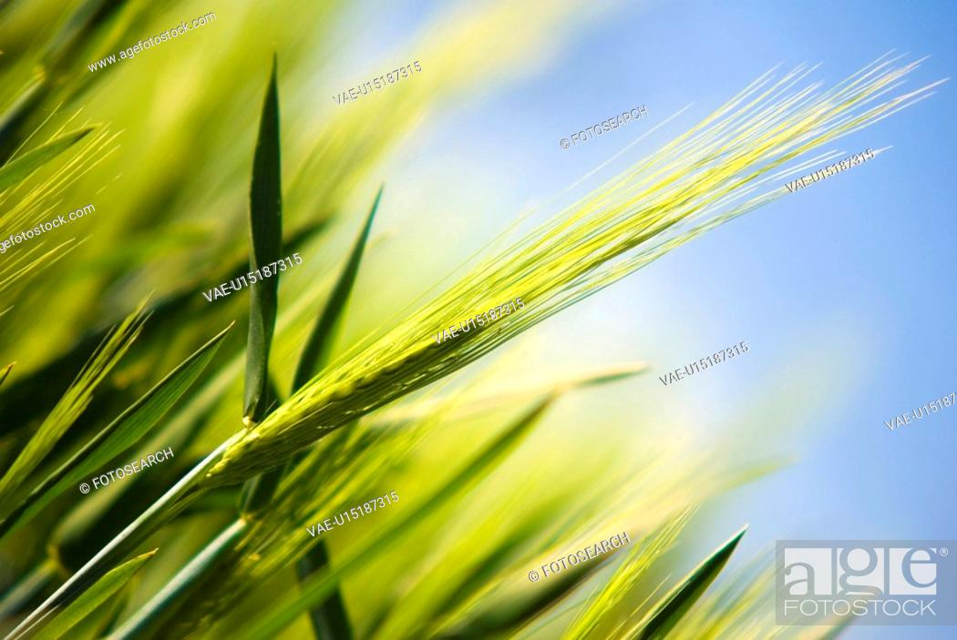 Stock Photo: agrarian natures, paint, soil culture, blue, agriculture.