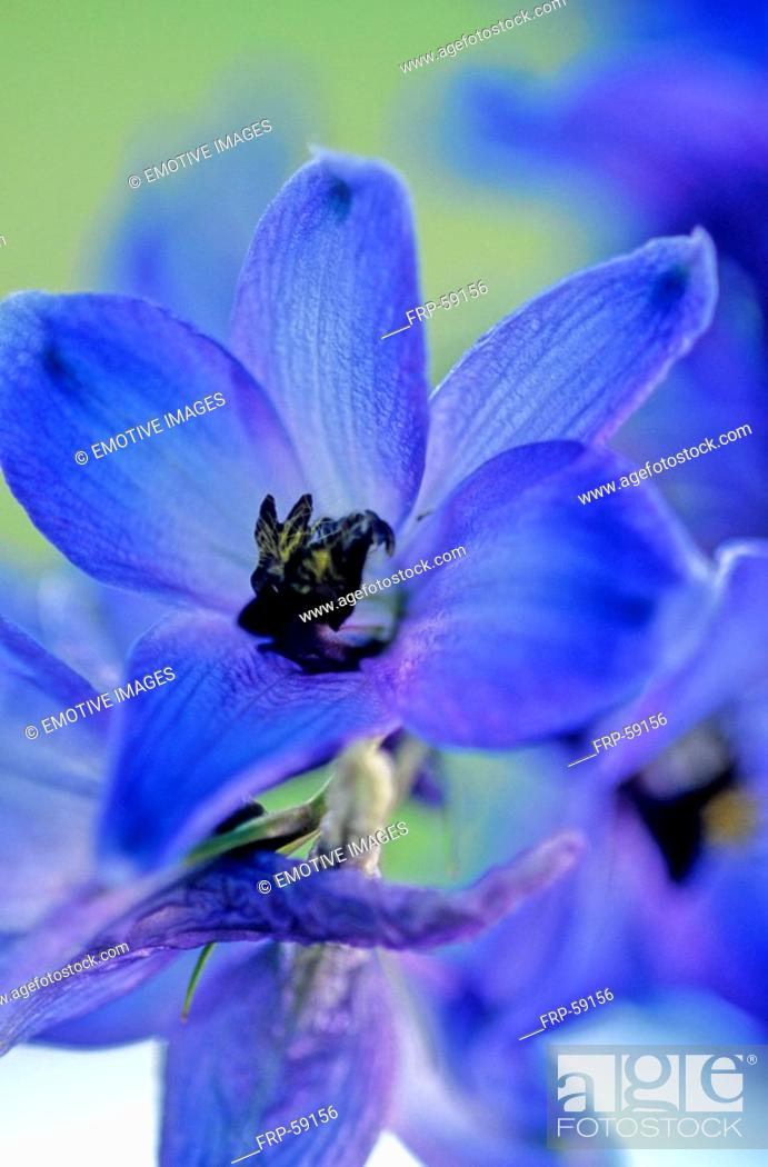 Stock Photo: spring squill.
