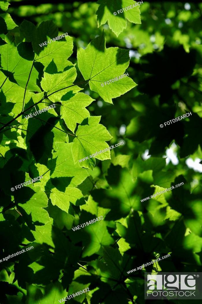 Stock Photo: Calm, Close-Up, Day, Flora, Foliage.