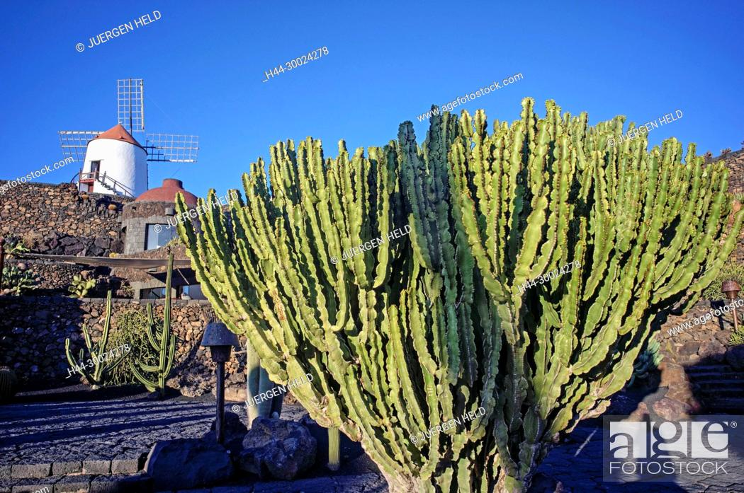 Stock Photo: Jardin de Cactus (Cactus Garden), Guatiza, Lanzarote, Canary Islands, Spain.
