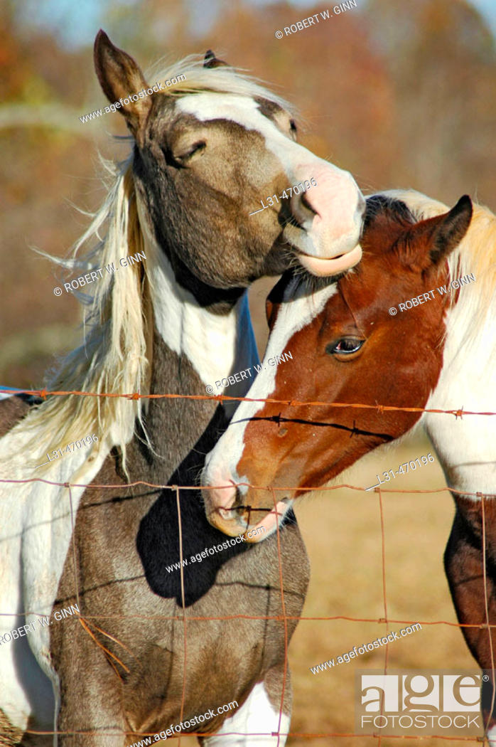 Stock Photo: Horses in pasture, one with colt.
