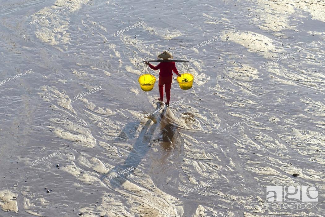 Stock Photo: China, Fujiang Province, Xiapu County, Woman, Fisherman on foot, harvesting shells, wearing a yoke with two buckets.