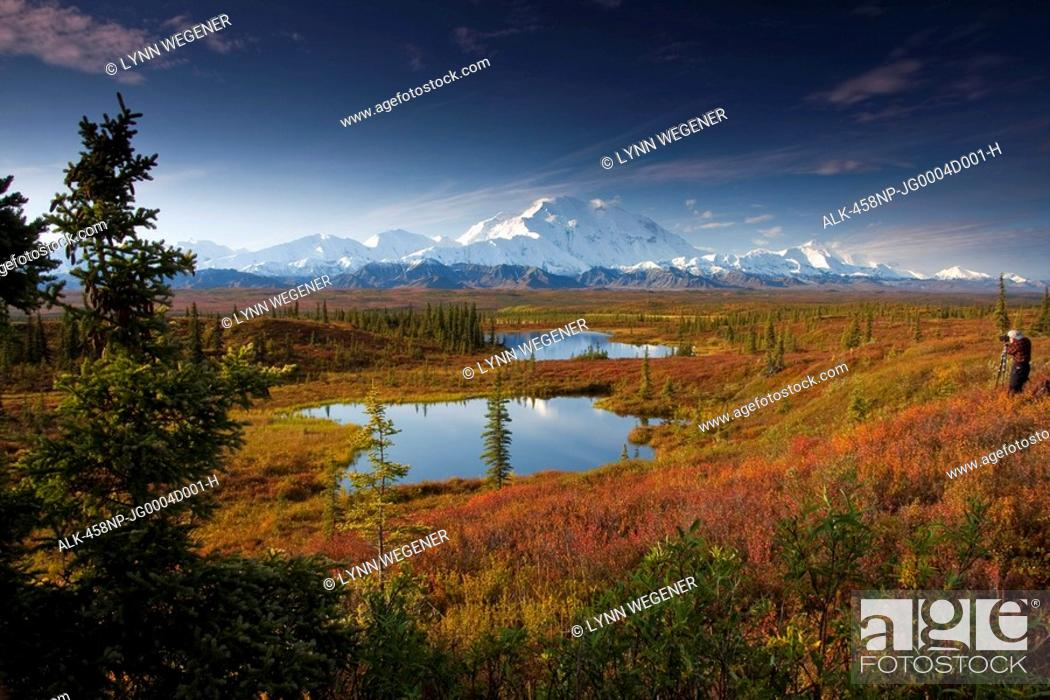 Photo de stock: Male hiker photographs Mt. McKinley in the morning near two kettle ponds in the fall tundra in Denali National Park, near the Wonder Lake Campground.