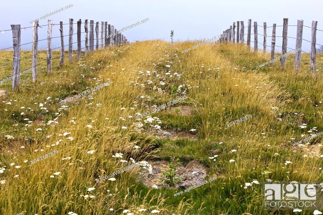 Photo de stock: Fence, pastures in Sierra de Abodi near Irati beechwood, Ochagavia. Pyrenees Mountains, Navarra, Spain.