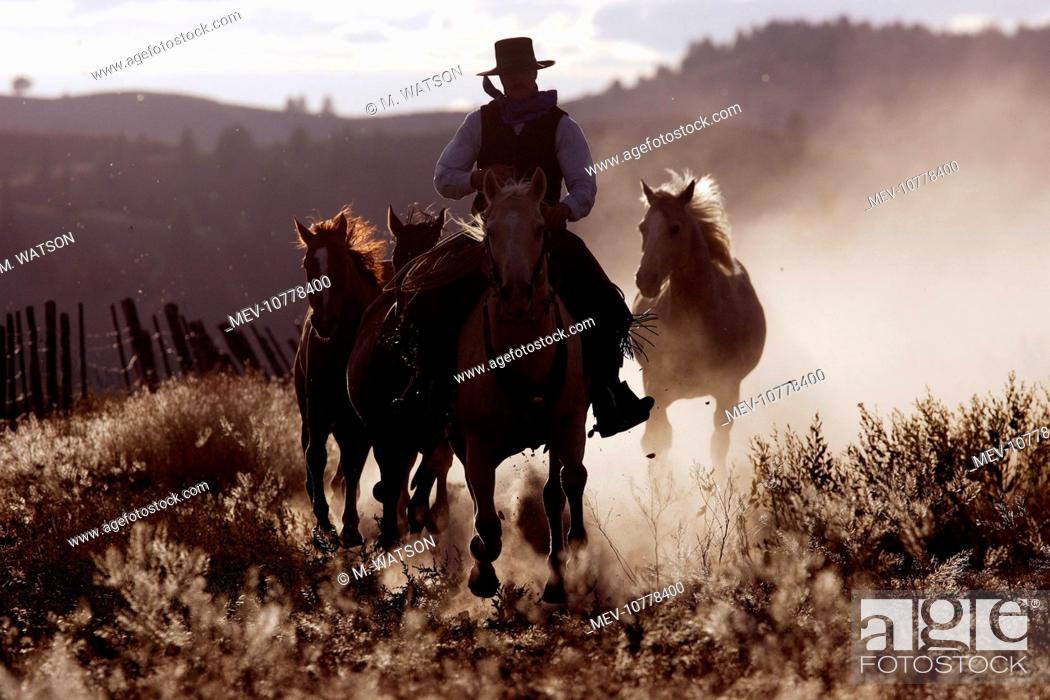 Stock Photo: Cattleman riding Quarter / Paint Horse.