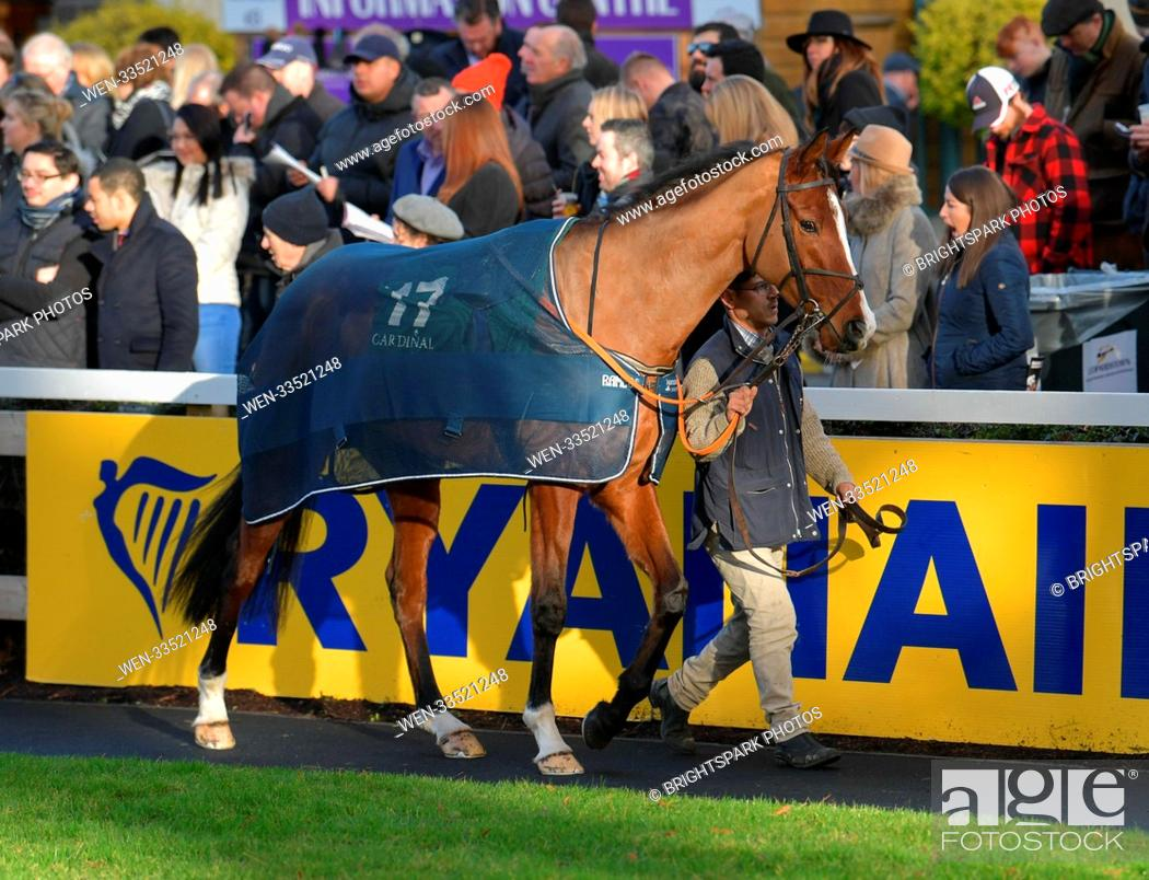 Stock Photo: Action from Leopardstown St Stephen's day racing meeting Featuring: Sparky Stowaway (17) winner of the 13:50 in the parade ring Where: Dublin.