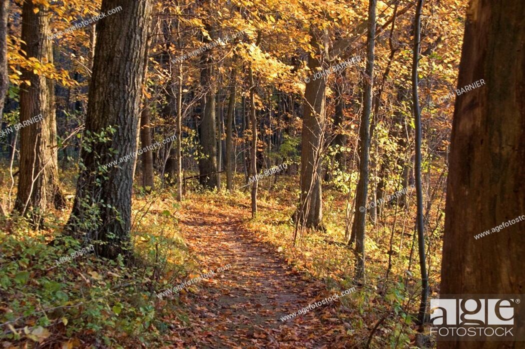 Stock Photo: Autumn trail at the Riveredge Nature Center, Wisconsin.