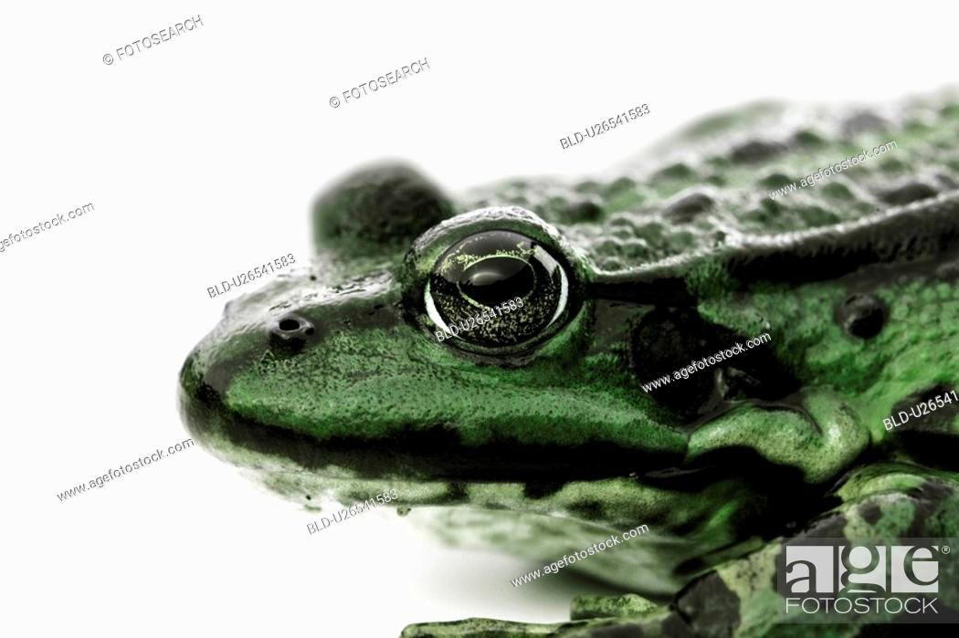 Stock Photo: close-up, amphibisch, camouflage, animal head, animal, close-upnear, amphibian.