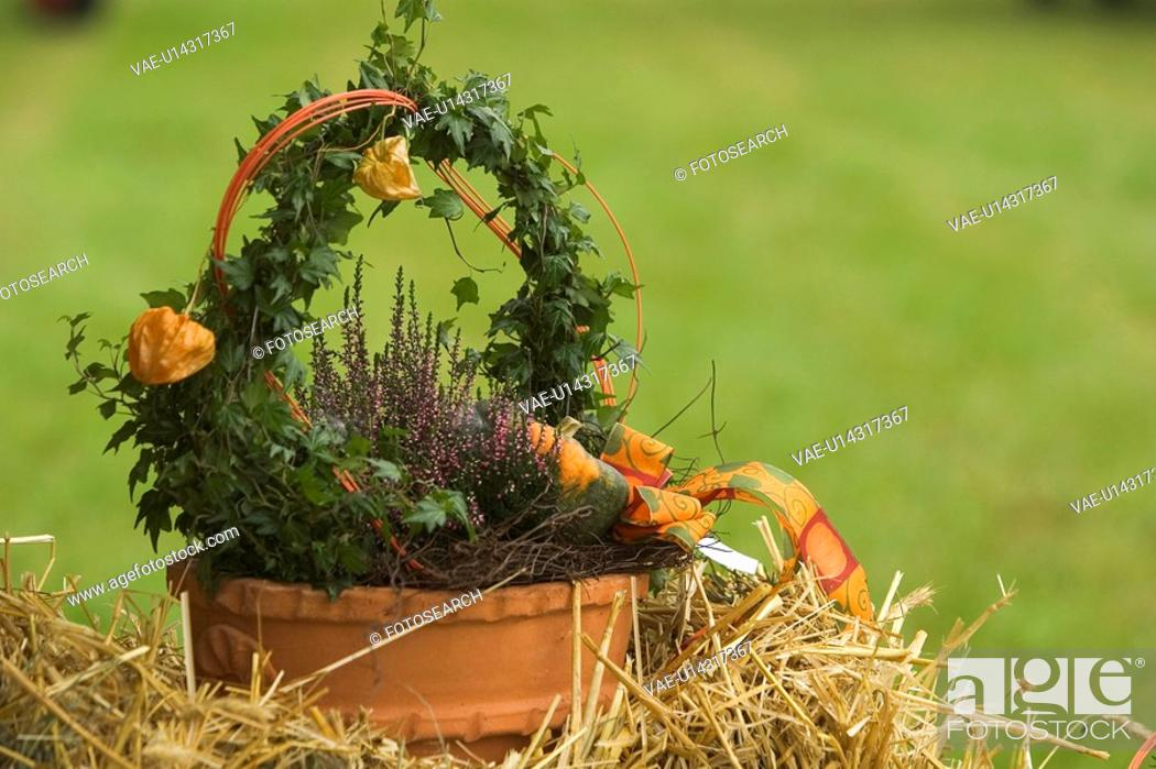 Stock Photo: Close-Up, Dry, Decoration, Day, Arrangement.