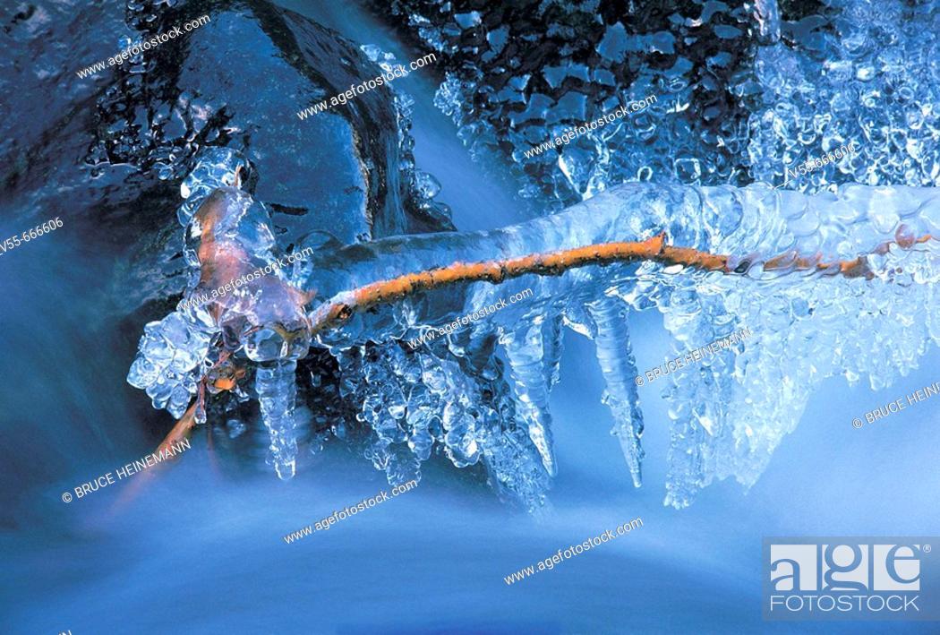 Stock Photo: Frozen brach in creek.