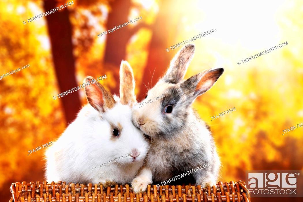 Stock Photo: 2 young rabbits.