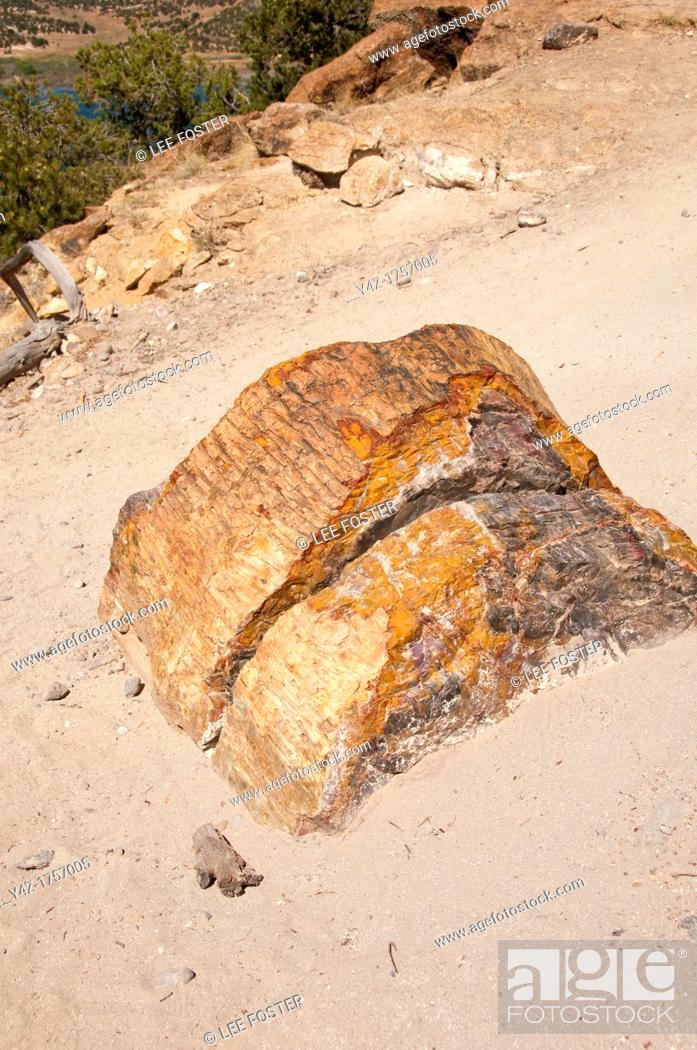 Stock Photo: USA, Utah, petrified wood seen while hiking at Escalante at Escalante Petrified Forest State Park to enjoy the petrified wood.