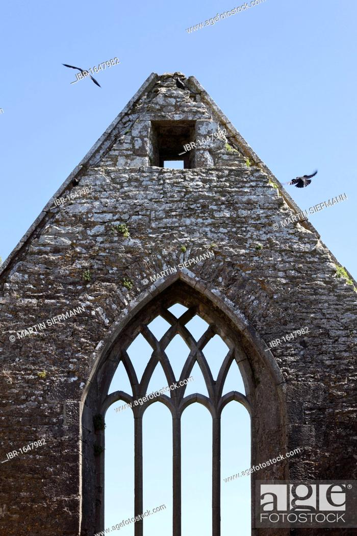 Stock Photo: Ross Abbey near Headford, County Galway, Connacht, Republic of Ireland, Europe.