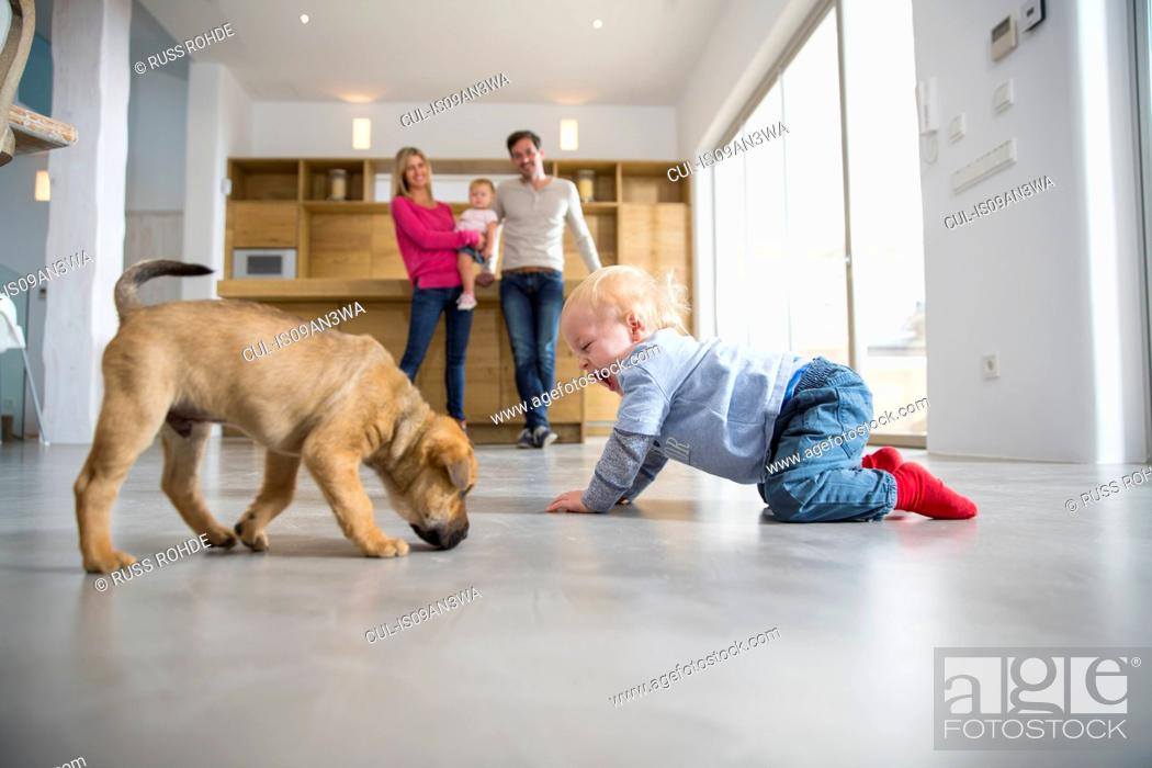 Stock Photo: Male toddler playing with puppy on dining room floor.