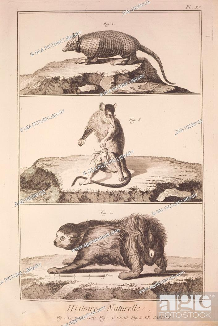Stock Photo: Plate showing armadillo, sloth and opossum. Engraving from Denis Diderot, Jean Baptiste Le Rond d'Alembert, L'Encyclopedie, 1751-1757.