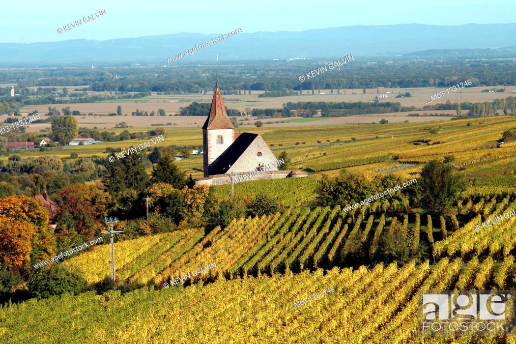 Stock Photo: Alsace wine route town Hunawihr France vineyard harvest grapes.