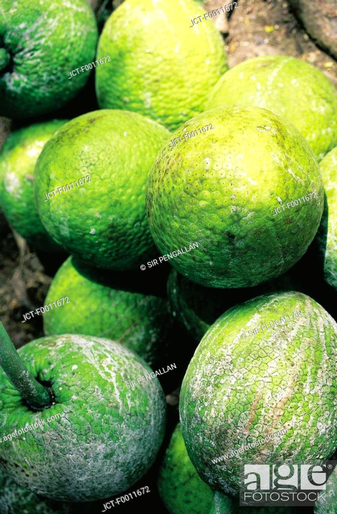Stock Photo: Jamaica, Kingston market, breadfruits to sell.