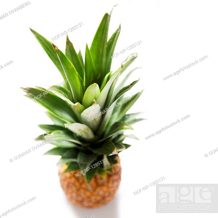 Stock Photo: A pineapple.