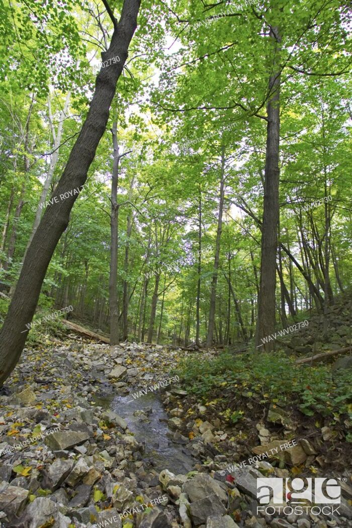 Stock Photo: Small stream running over rocks through wooded area, Canada, Ontario, Hamilton.