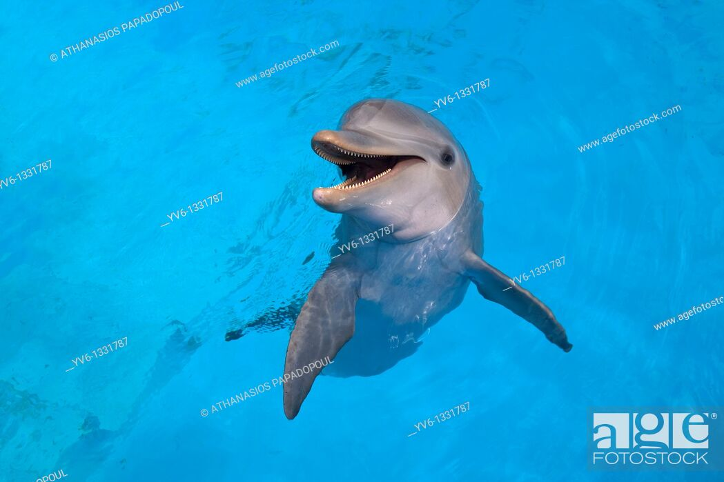 Stock Photo: Photograph of a smiling dolphin in the water, ACUARIO NACIONAL, AV 3 AND CALLE 62, OUTER HAVANA, HAVANA, CUBA.