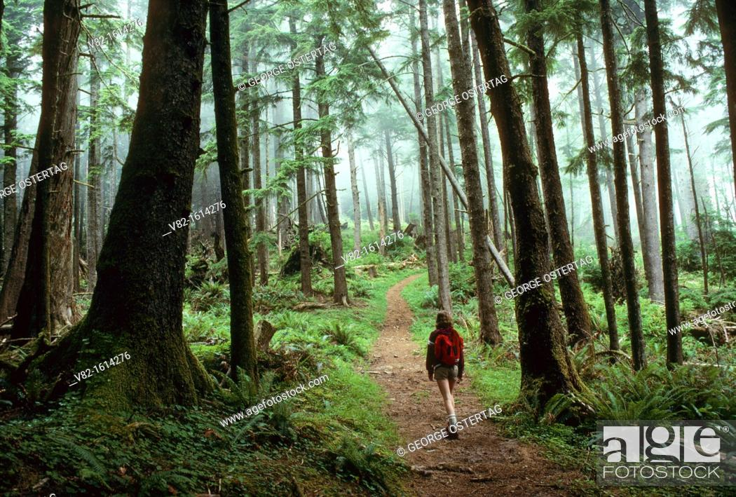 Stock Photo: Sitka spruce Picea sitchensis forest on Tillamook Head Trail, Ecola State Park, OR.