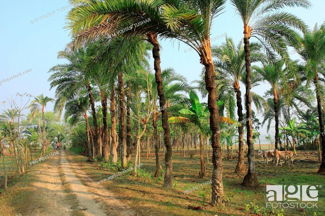 Imagen: a village road in jessor district of Bangladesh.