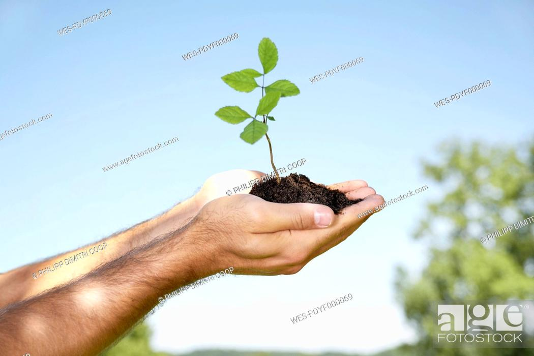Stock Photo: Germany, Cologne, Young man holding seedling.